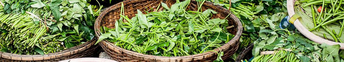 Травяное питание и водное голодание по Столешникову